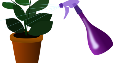 pokojové rostliny kropit